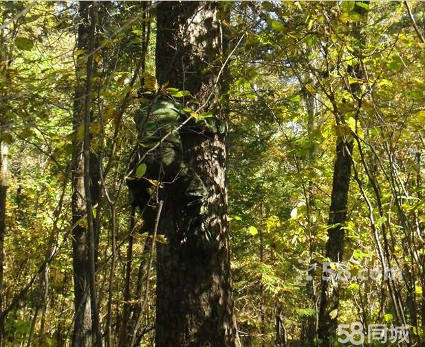 壁纸 风景 森林 桌面 618_506