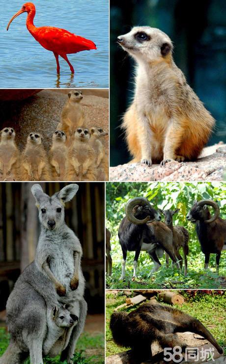 南山野生动物园多少公里