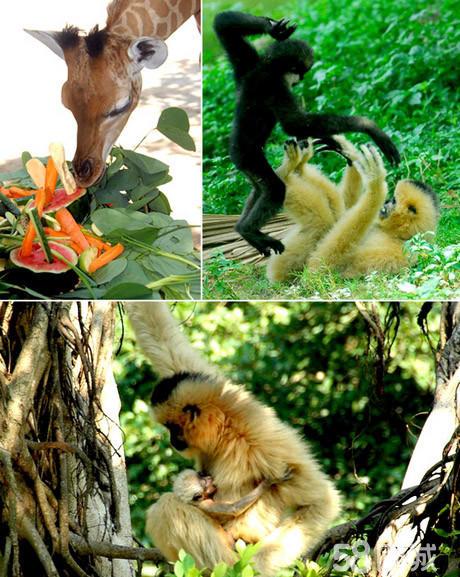 二级保护动物,如金丝猴