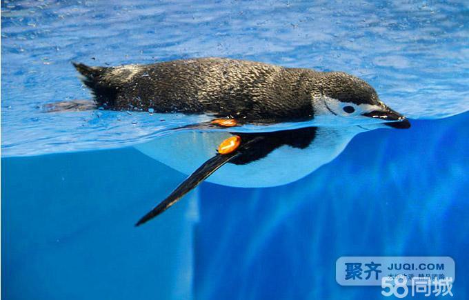 拥有大型鲸豚表演馆,是整个极地海洋世界