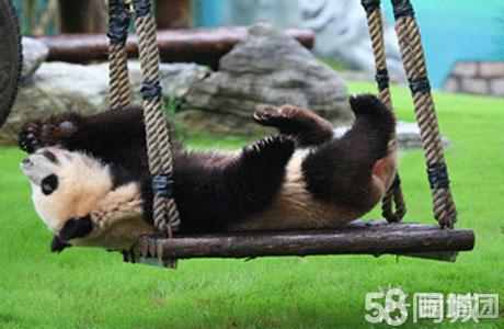 """【上海野生动物园】聆听最自然的丛林呼唤,回归""""原始森林""""!"""