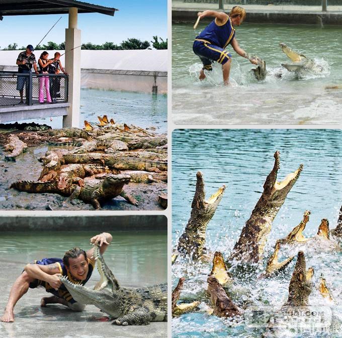 """观看省内唯一海狮,鳄鱼,鹦鹉等动物表演,感受湿地动物精彩""""4d大片""""!"""