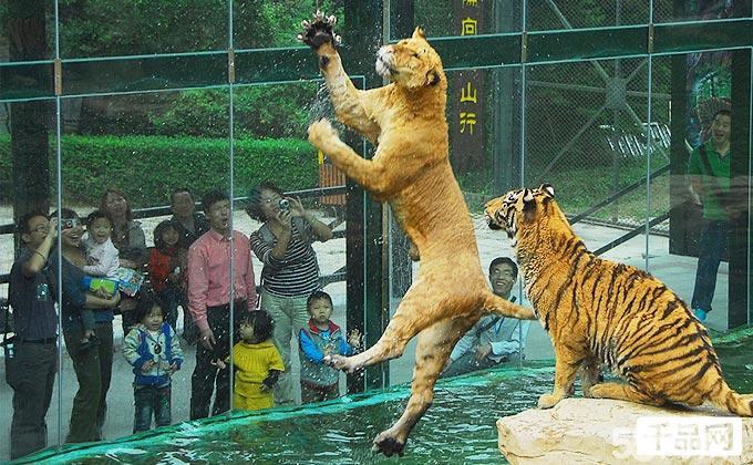 (深圳野生动物园+海洋天地)合家欢年卡1张!