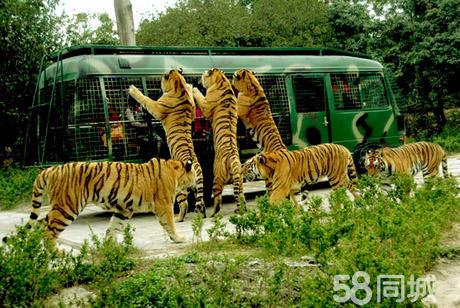 [西丽] 深圳野生动物园