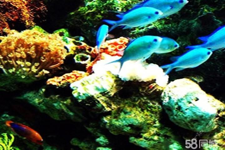 老虎滩海洋公园 1