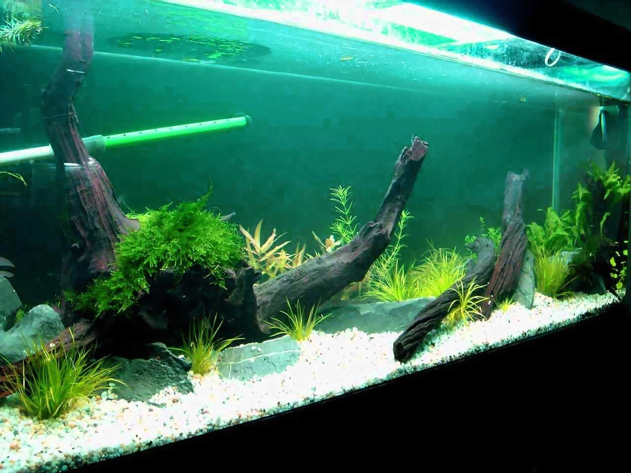 壁纸 动物 水草 水生植物 鱼 鱼类 1280_960