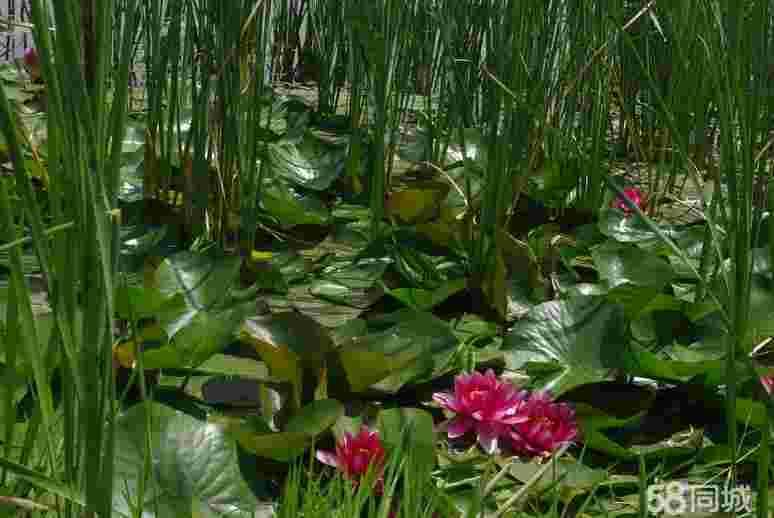 北京房山花田湿地